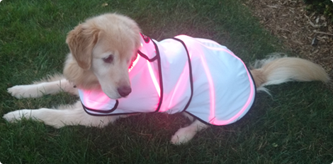 Canine Laserwrap Advantage Spectra Therapy