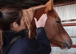 horsepoll