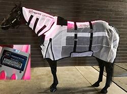 horsesheet1b