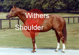 horseshoulder