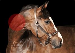 horsesneck